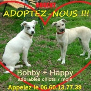 happy-et-bobby1-300x300 dans Articles